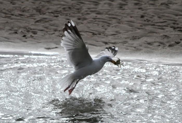 Windsurf-Wissant-08-juin-2013-17